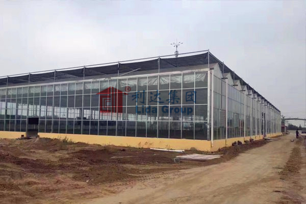 New high standard greenhouse